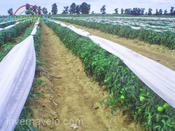 tela térmica en cultivo de hortalizas.
