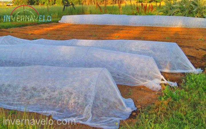 micro-túnel de hortalizas con INVERNAVELO.