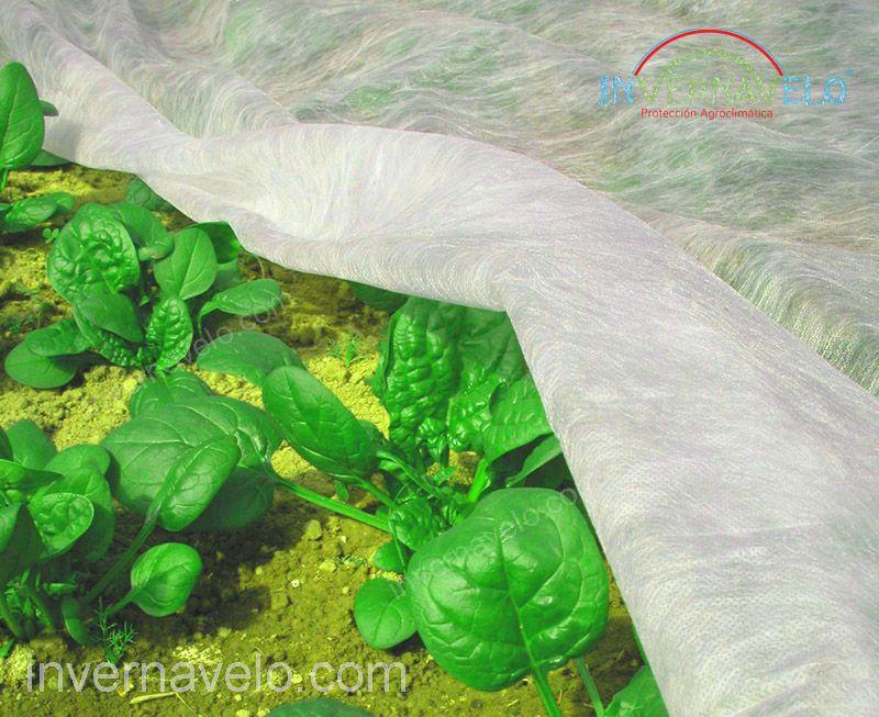 tela antiheladas en producción de plantas.