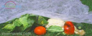 anti heladas en cultivos