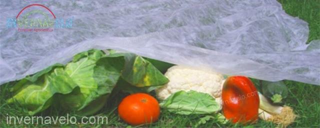 cultivo de tomate con invernavelo.